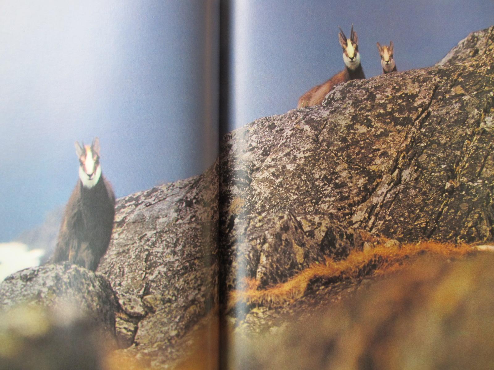 Carte Gebirsgsfotografie (album fotografii montane) - Sieghard Liebe
